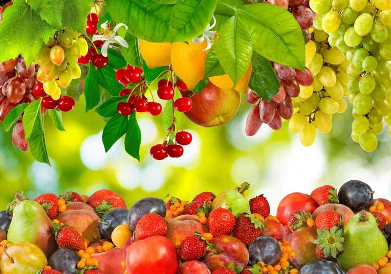 ۱۰ نشانه و تعبیر دیدن باغ میوه در خواب