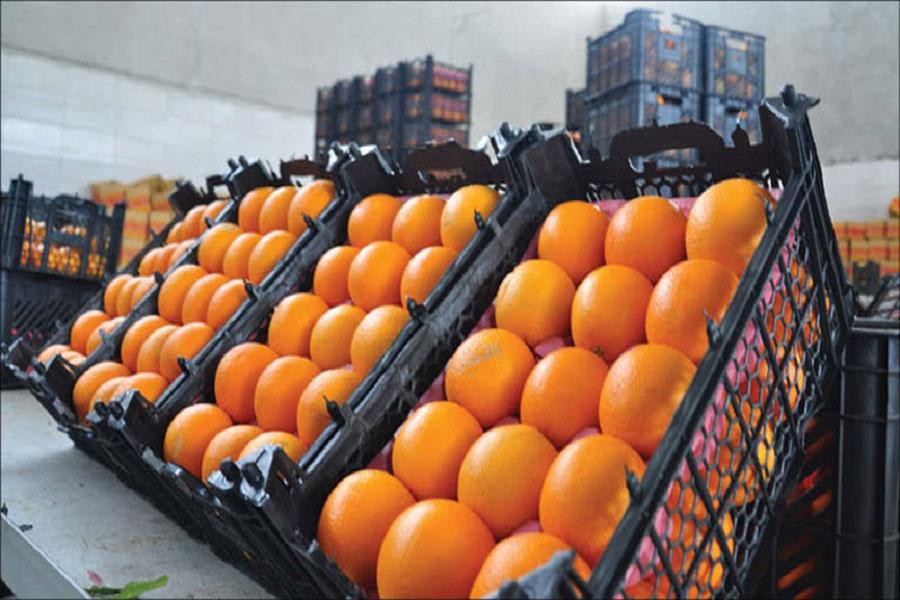 توزیع سیب و پرتقال با ۲۰% تخفیف + جزئیات