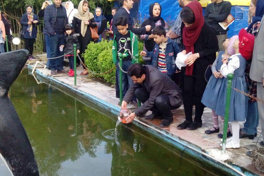 ماهی سفره هفت سین را در آب های آزاد نیندازید !