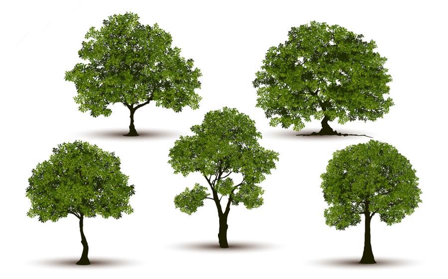 تعبیر خواب درخت و انواع درختان چیست ؟