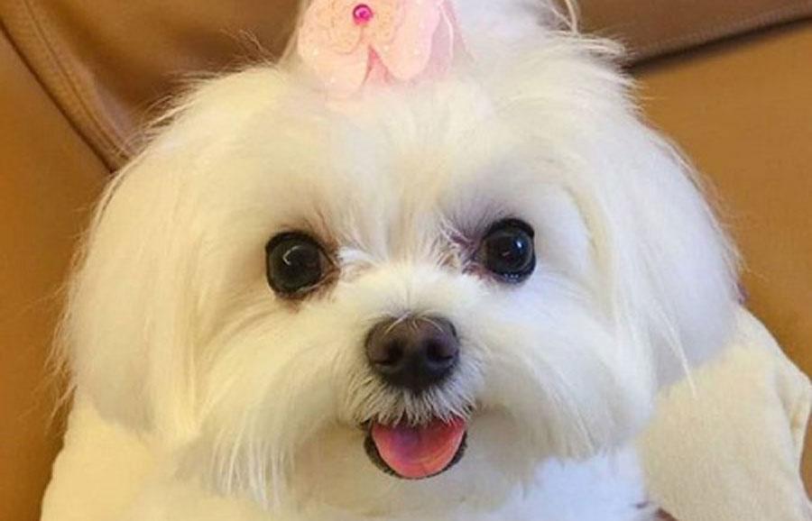 ماجرای دزدیدن سگ ۴۰ میلیونی در سعادت آباد