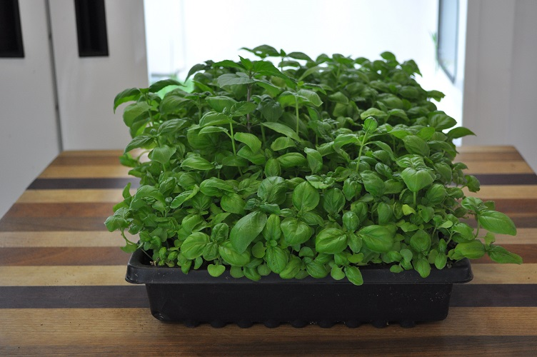 آموزش کاشت و نگهداری سبزی خوردن در خانه و آپارتمان