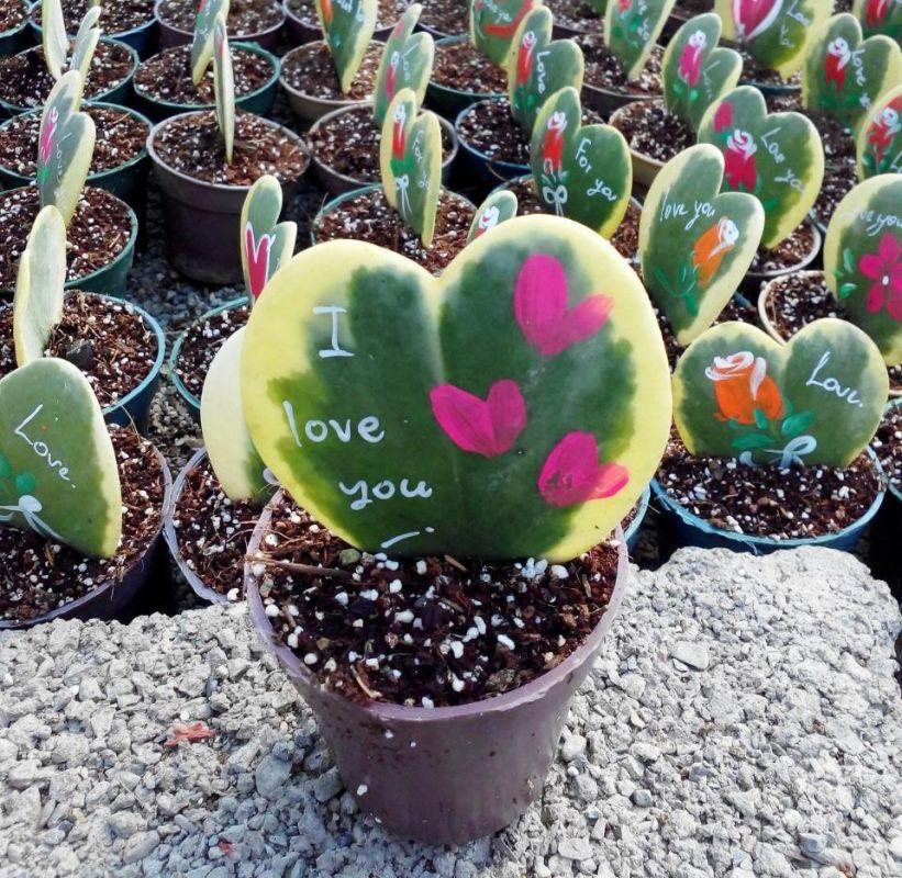 گیاهی که به شما عشق میورزد
