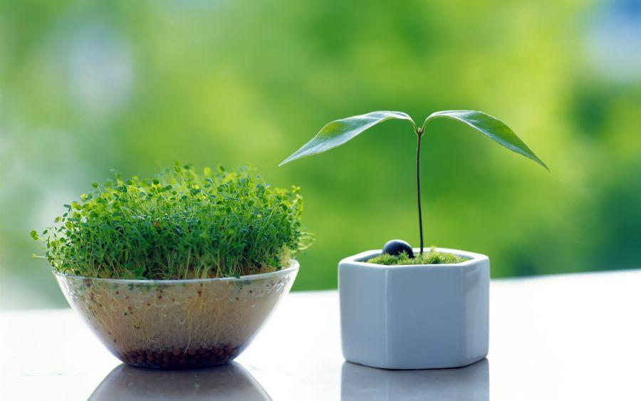 آموزش طرز کاشت سبزه