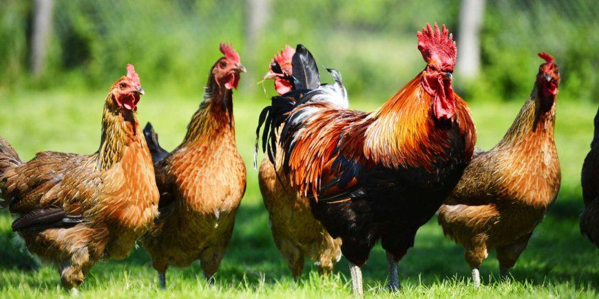 حکم شرعی نگهداری حیوان های خانگی یا زینتی
