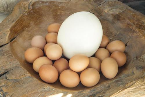 چندین مورد از مهم ترین خاصیت ها و ویژگی های تخم پرندگان