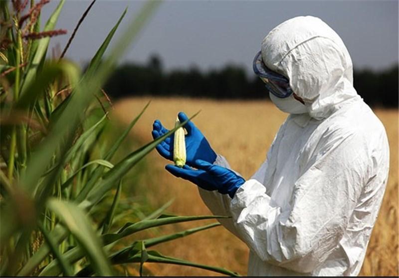 گلایفوسیت چیست؟ چه خطراتی دارد؟
