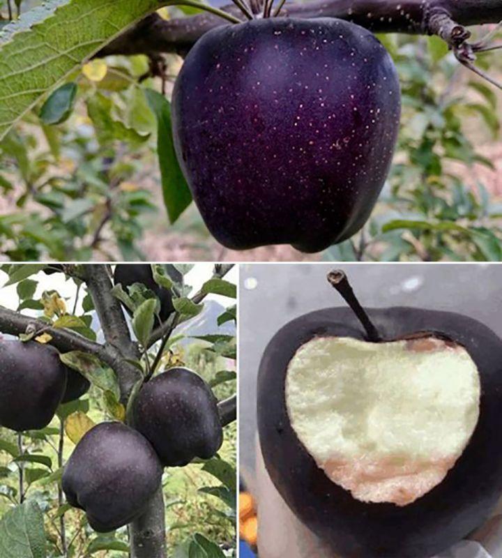 سیاه ترین میوه دنیا رو تا حالا دیدین ؟