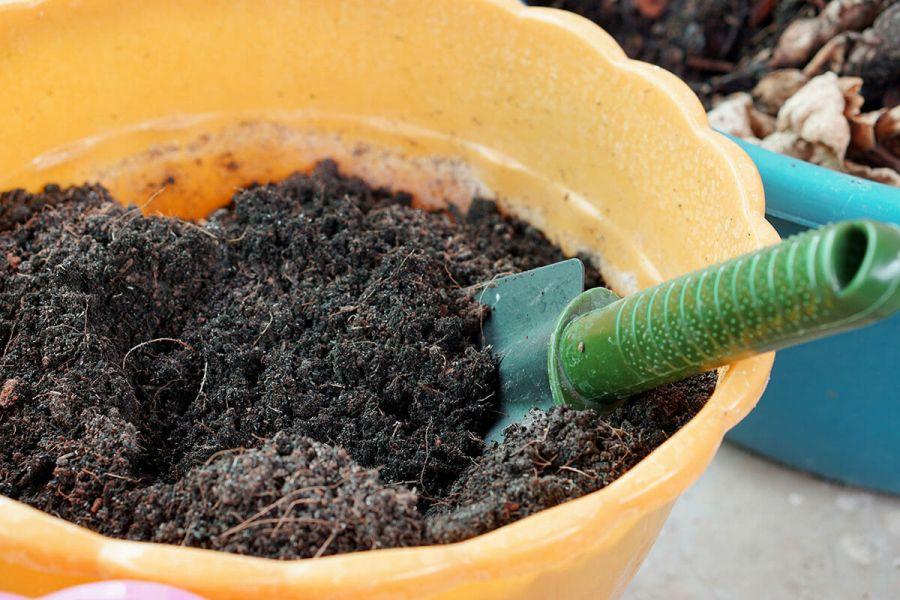 روش های تقویت خاک گلدان با ایده های طبیعی و ارزان در منزل