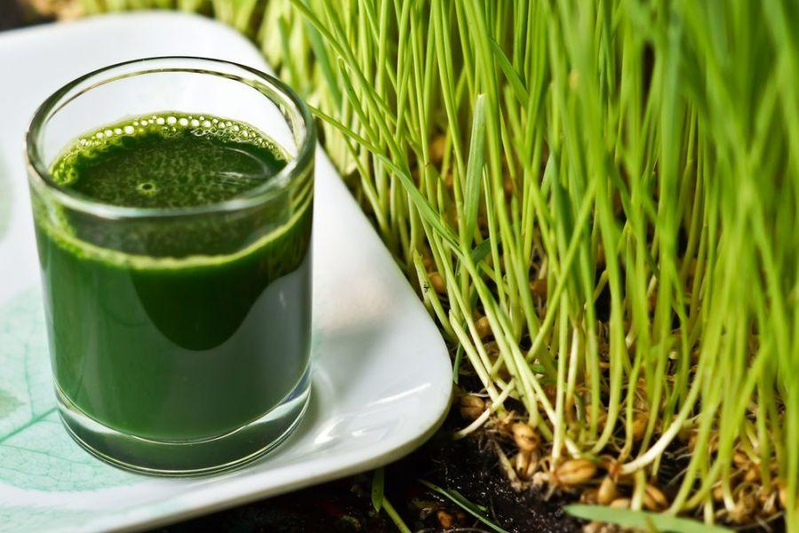 آشنایی با خواص آب سبزه گندم برای بدن