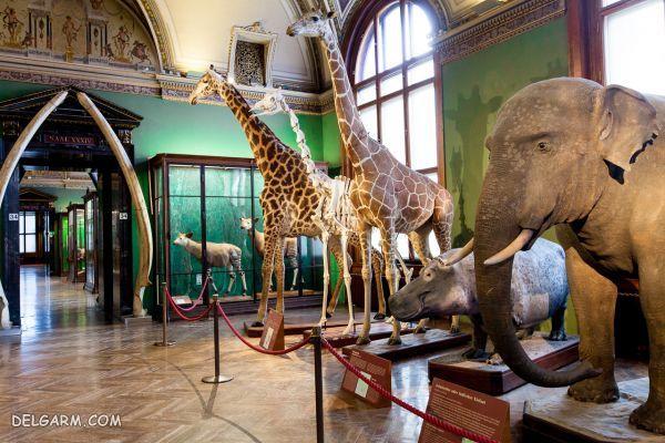 (Vienna Natural History Museum) : موزه ی تاریخی طبیعی وین