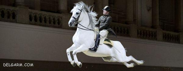 (The Spanish Riding School)  مدرسه اسپانیایی سوارکاری