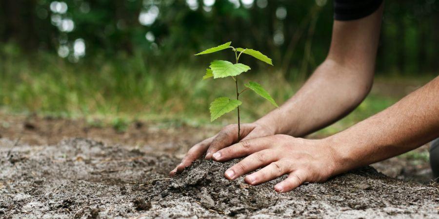 روز درختکاری در تقویم ایران چه روزی است ؟