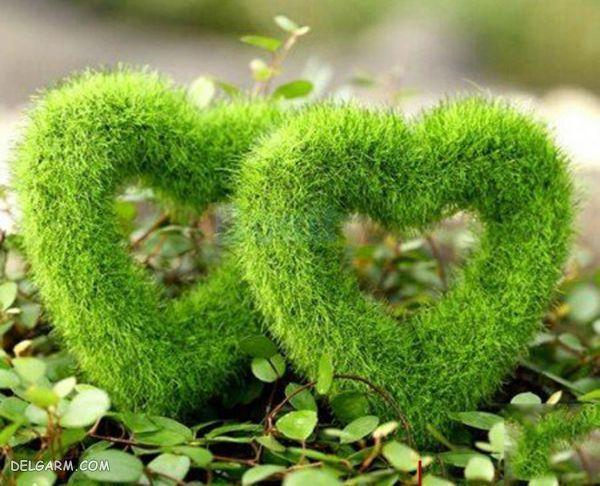 سبزه 98 مدل قلب