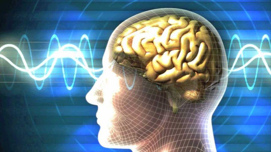 اسبک یا هیپوکامپ مغز چیست و چه عملکردی دارد ؟