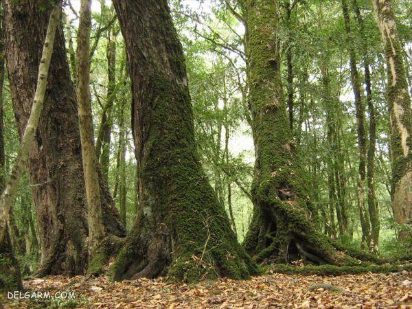 پارک جنگلی سی سنگان مازندران