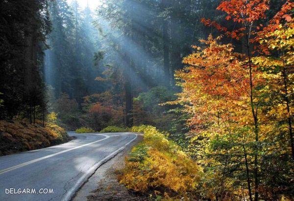 جنگل زیبای توسکستان در شهر گرگان