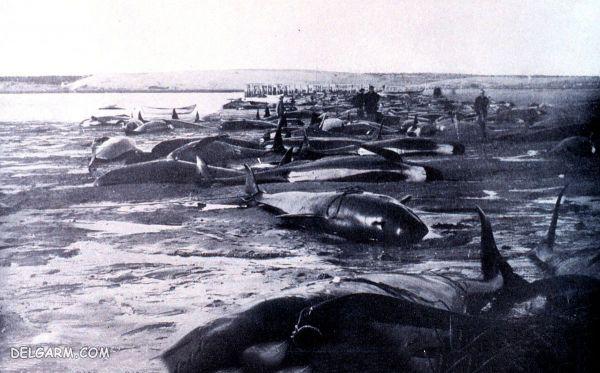 خودکشی نهنگ ها