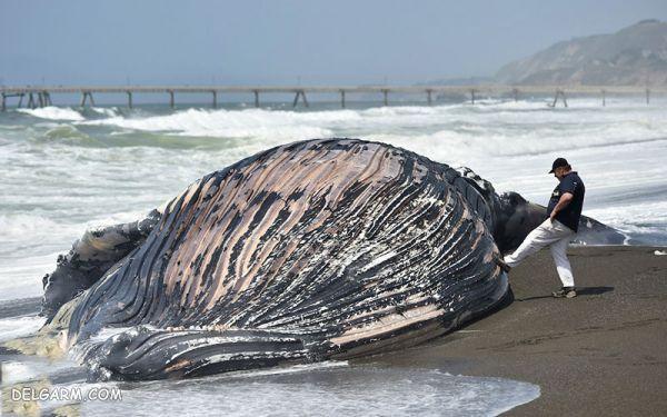 راز خودکشی نهنگ ها
