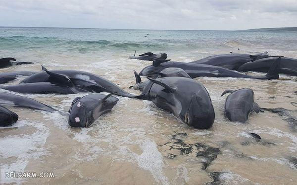 علل خودکشی نهنگ ها