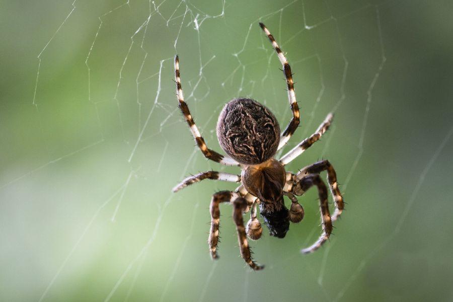چگونه رتیل را از عنکبوت تشخیص دهیم و این دو چه فرقی با هم دارند ؟