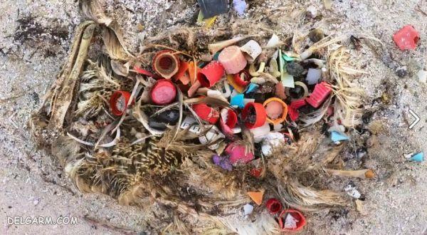 زباله ها تجزیه ناپذیر در طبیعت