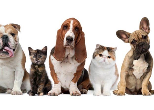 مرکز خرید حیوانات خانگی