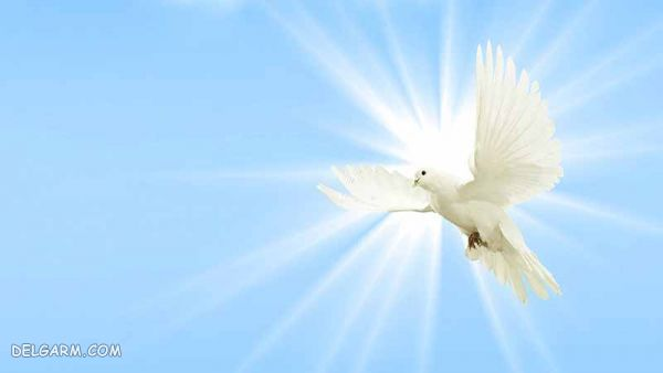 شعر در مورد روز صلح