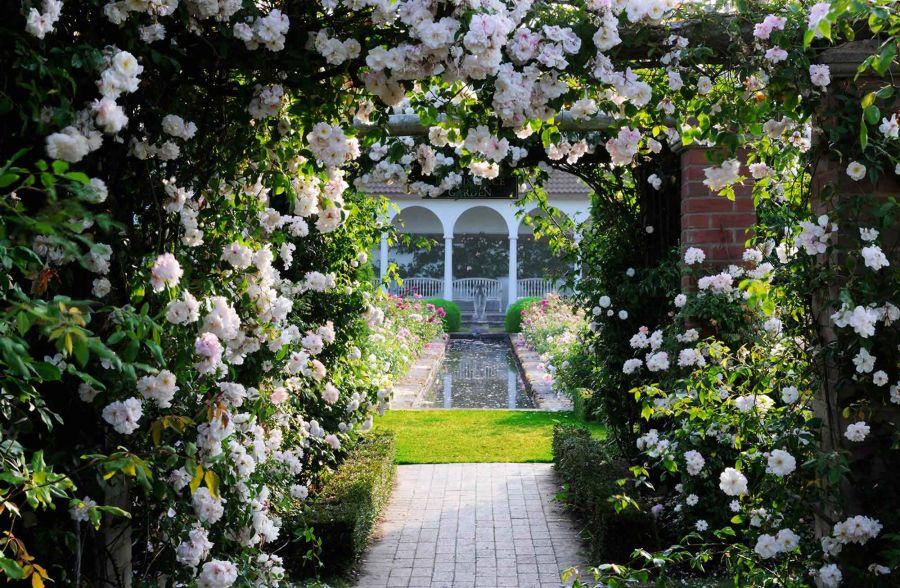 معرفی ۱۰ گل زیبا و خوشبو برای سال نو ۹۸
