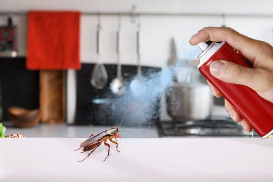 انواع حشره کش : ۷ نوع از حشرهکش های قوی و مورد نیاز