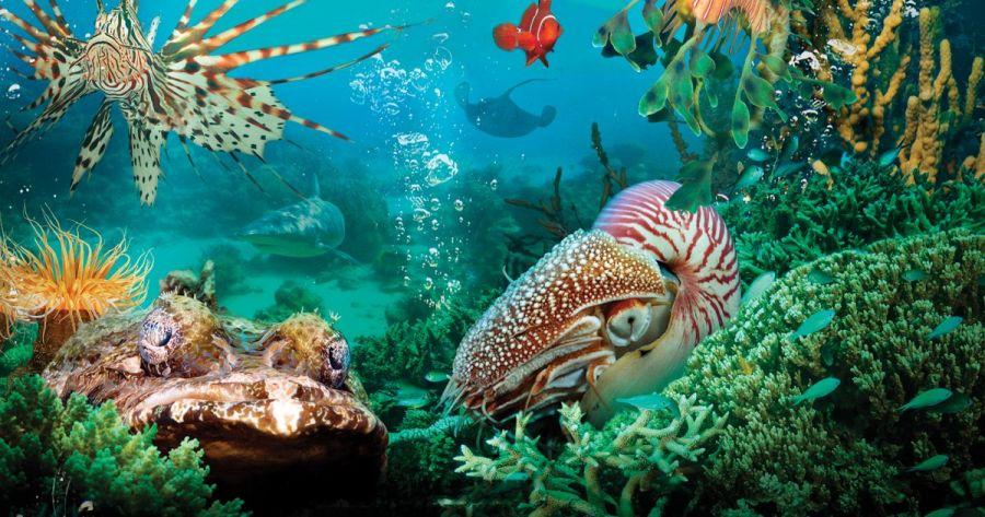 روز جهانی اقیانوس ها چه روزی است ؟