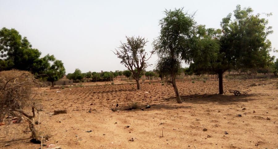 روز جهانی مبارزه با بیابان زایی و خشکسالی چه روزی است ؟