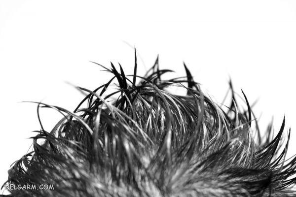 افراد با موهای چرب