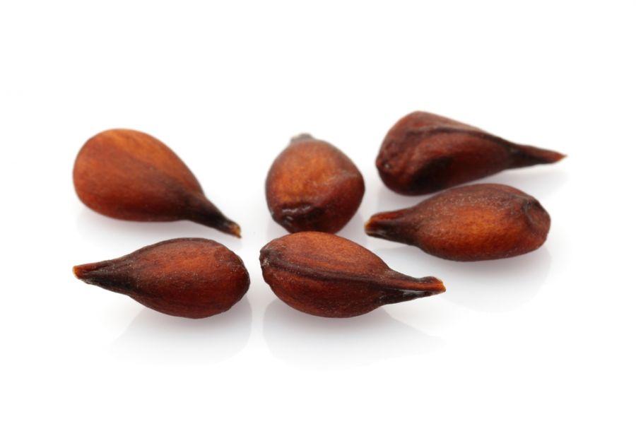 خواص درمانی دانه میوه به