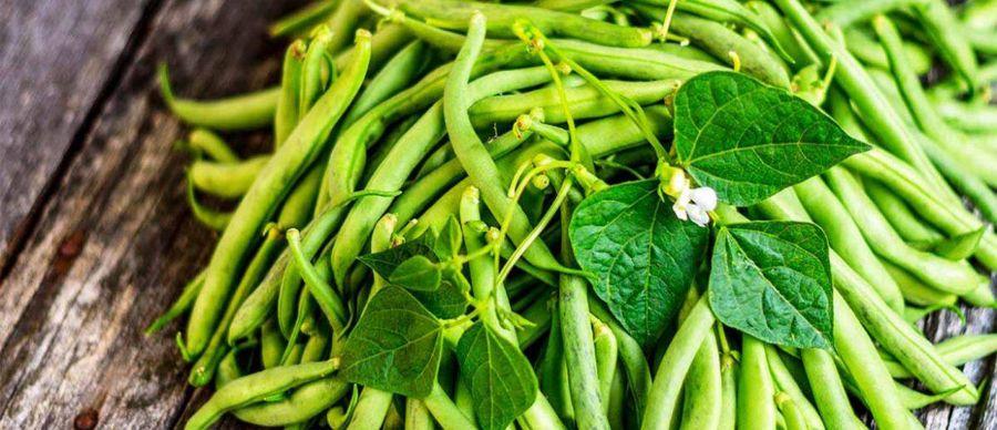 آشنایی با کالری، ارزش غذایی و خواص لوبیا سبز
