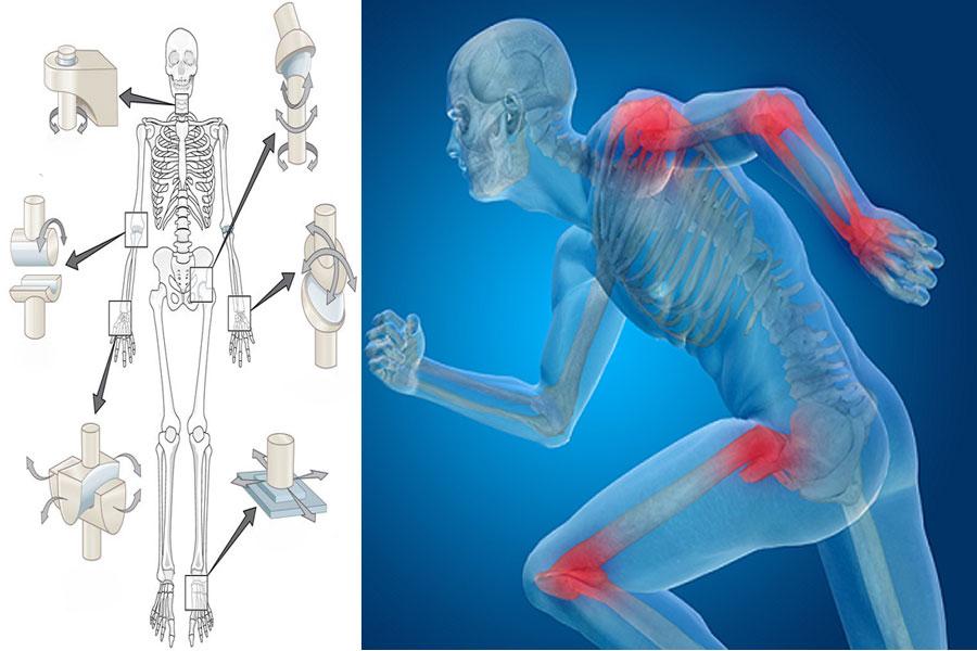 انواع مفصل متحرک (غیر ثابت) و کاربرد هر کدام در بدن