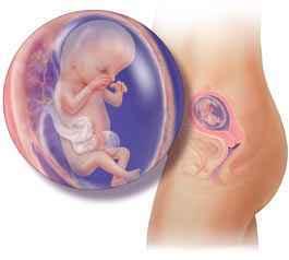 هفته سیزدهم بارداری