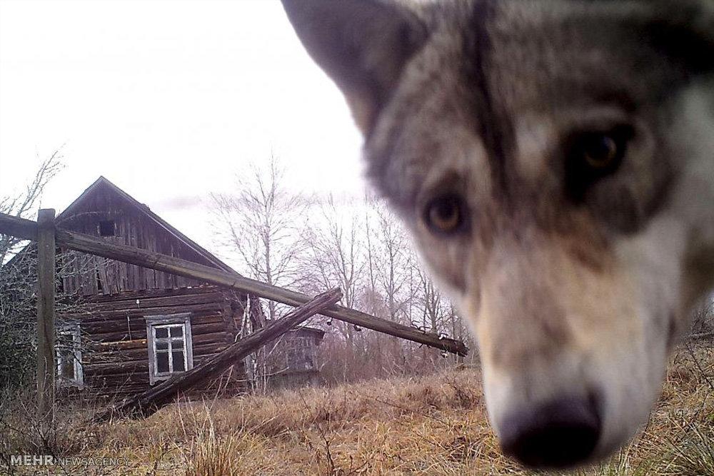 عکس های سال رویترز از حیوانات