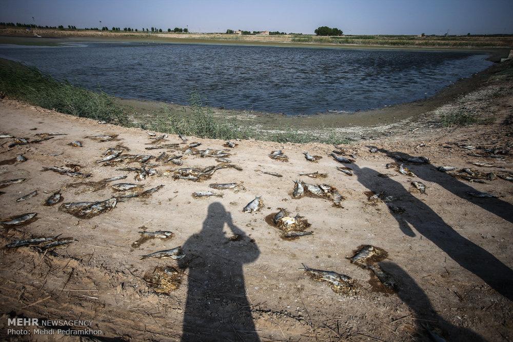 مرگ ماهیان مجتمع پرورش ماهی در خرمشهر / تصاویر