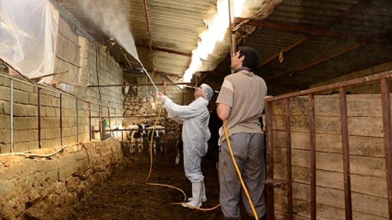 اقدامات پیشگیرانه ازشیوع تب کنگو در مازندران جلوگیری کرد