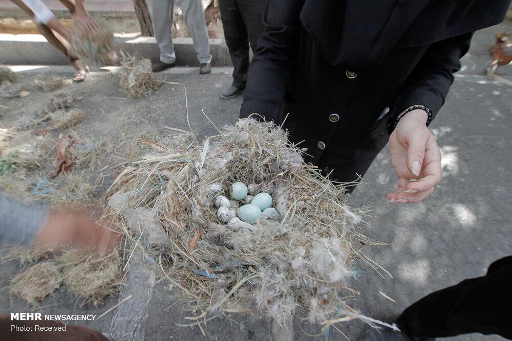 تصاویر تخریب لانه پرندگان در شیراز