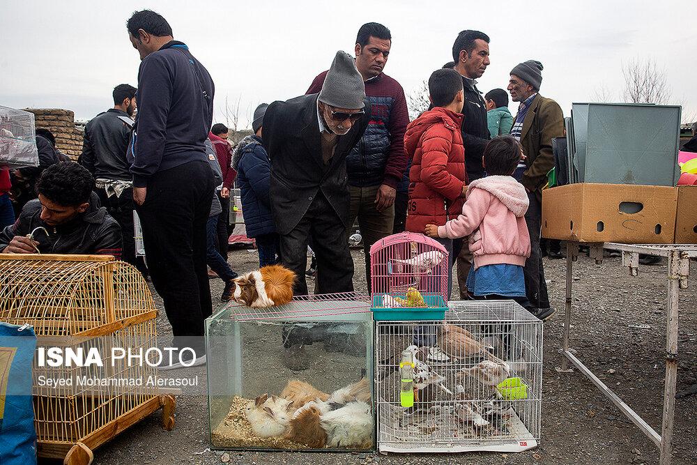 تصاویر جمعه بازار پرندگان در مشهد