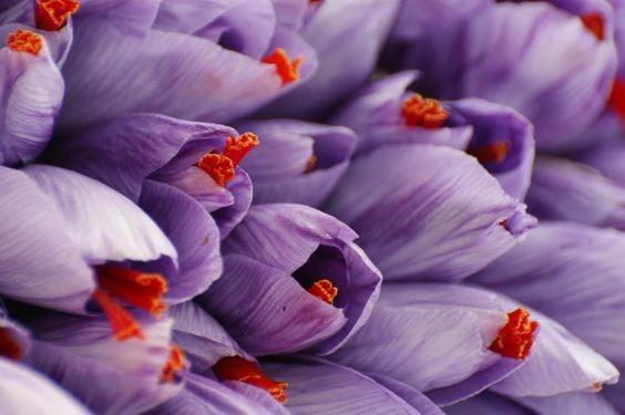 زعفران برای بدن چه خواص دارویی دارد؟