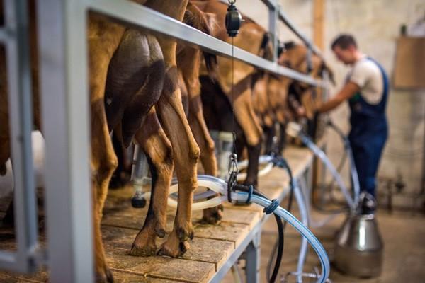 نقش تکنولوژی در بهبود کیفیت شیر و سایر مواد لبنی