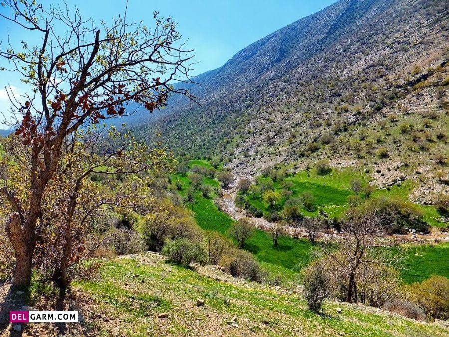 دالاهو منطقه ای سرسبز با آب های خروشان در استان کرمانشاه