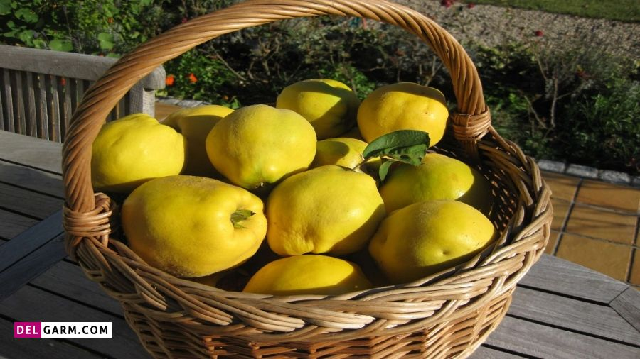 میوه به یکی از میوه های ضد اسهال