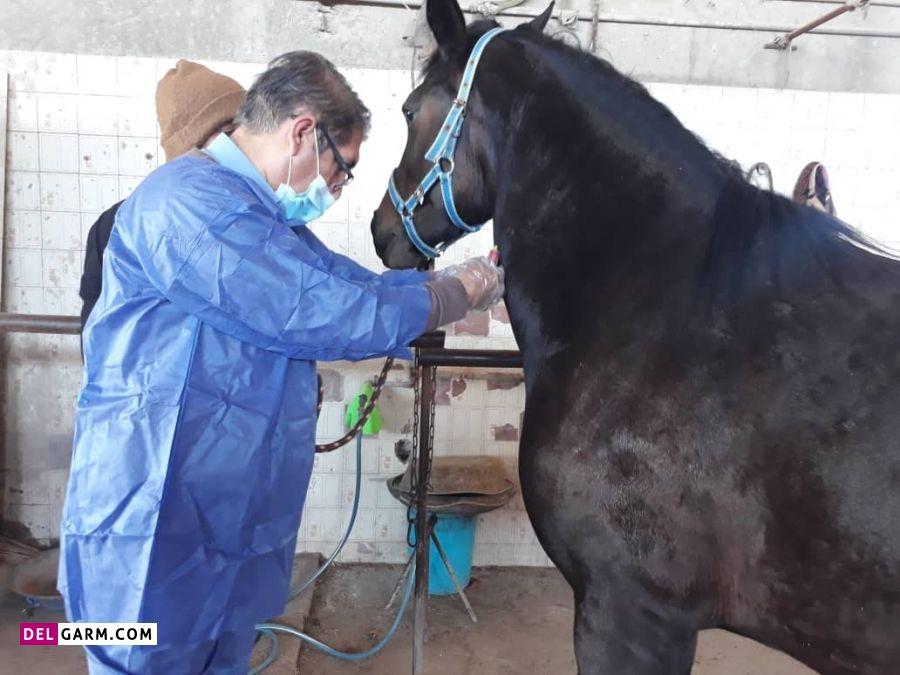 بیماری اسب