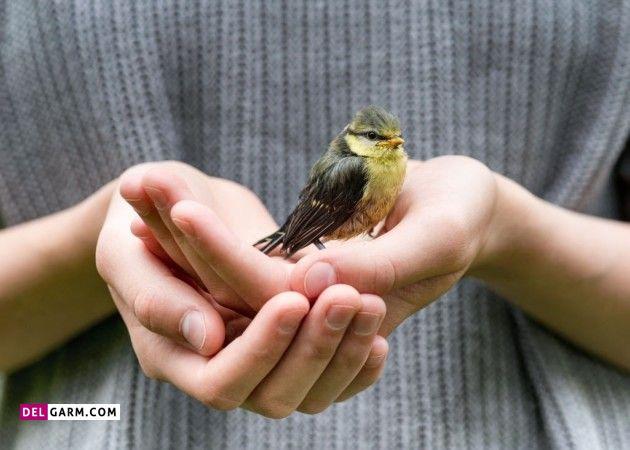 مسمومیت با پیاز و شکلات در پرندگان