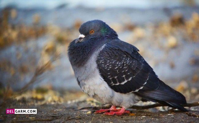 یکی از دلایل اصلی بیماری های تنفسی در پرندگان آنفولانزای پرندگان است