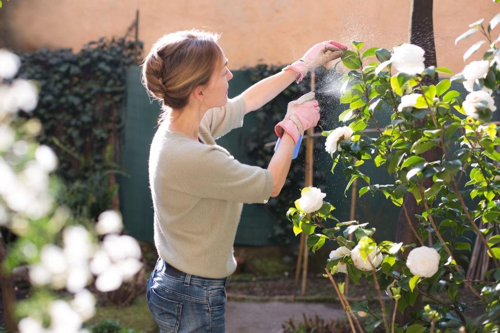 چطور گیاه آفتابسوخته را احیا کنیم؟
